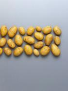 Tipps + Tricks rund um die Kartoffel