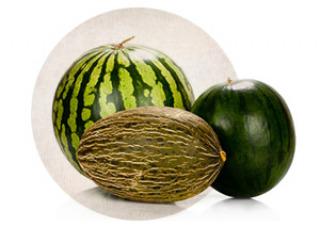 Rezepte mit Melone