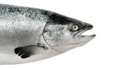 Ist Seefisch mit Schadstoffen belastet?