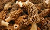 Pilze haben wenige Nährstoffe