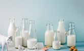 Milch & Milchprodukte