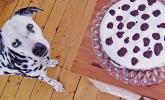101-Dalmatiner-Kuchen