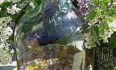 Wildblüten - Bowle