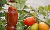 Hot Zucchini Salsa