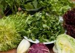 Der passende Salat - kleines Salat ABC